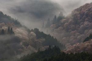 Yoshino Japan by Art Wolfe