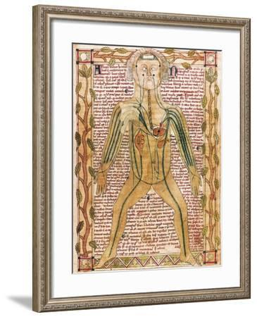 Arterial and Venous System, 'Treatise on the Human Body' 1292--Framed Art Print