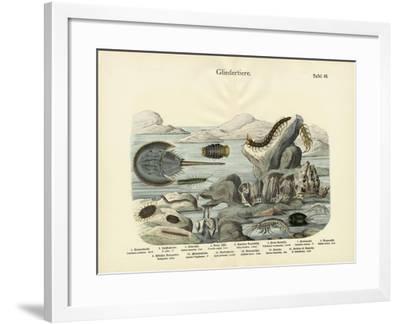Arthropods, C.1860--Framed Giclee Print