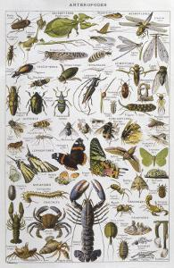 Arthropods Including a Wide Variety of Insects