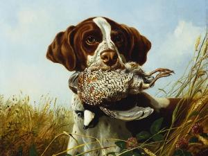 A Pointer with a Quail Amongst Clover by Arthur Fitzwilliam Tait