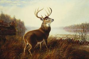 A Stag by a Lake by Arthur Fitzwilliam Tait