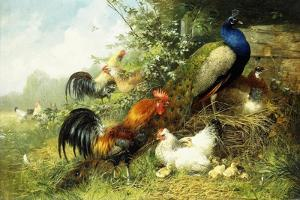 Fowl and Peacocks, 1899 by Arthur Fitzwilliam Tait