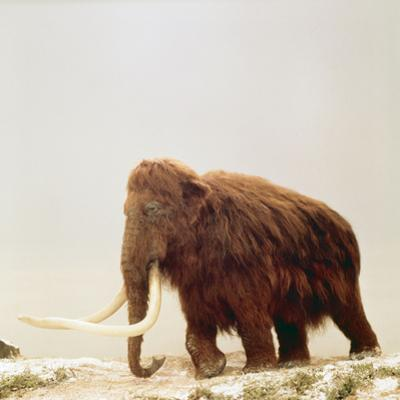 Woolly Mammoth Prehistoric Reconstruction