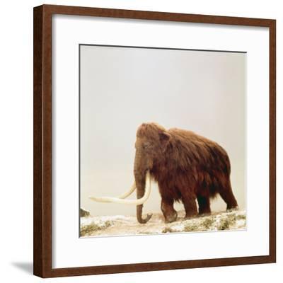 Woolly Mammoth Prehistoric Reconstruction