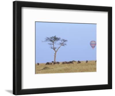 Ballooning Over Wildebeests