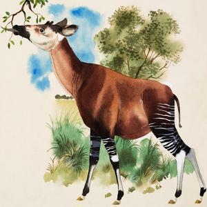 Okapi by Arthur Oxenham