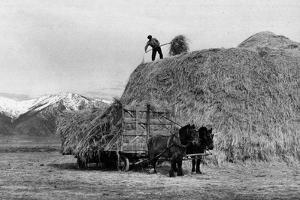 Loading Hay by Arthur Rothstein