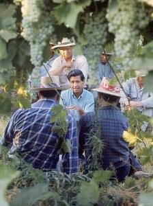 Labor Activist Cesar Chavez Talking in Field with Grape Pickers of United Farm Workers Union by Arthur Schatz