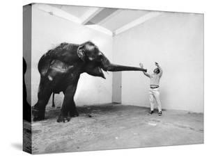 Life Photographer Arthur Schatz with Elephant While Shooting Story on the Franklin Park Zoo by Arthur Schatz