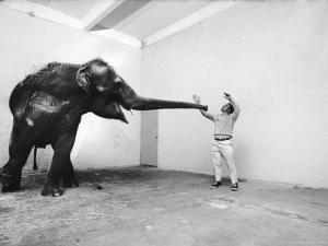 Life Photographer Arthur Schatz with Elephant While Shooting Story on the Franklin Park Zoo by Arthur Schatz