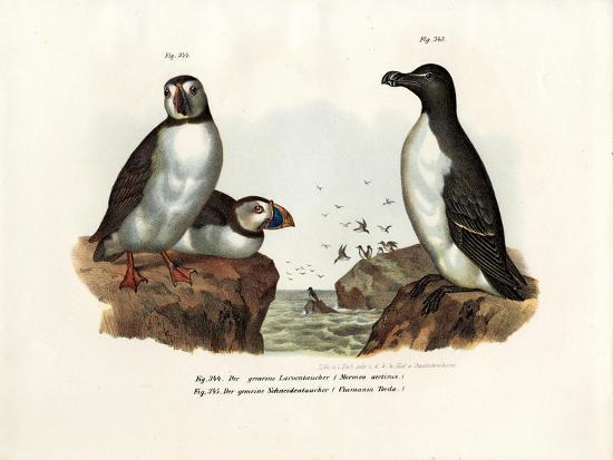 Artic Puffin, 1864--Giclee Print