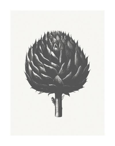 Artichoke (Ivory & Ink )-Botanical Series-Art Print