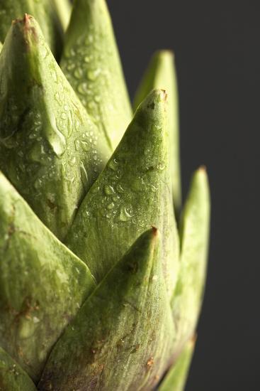 Artichoke Leaves--Photographic Print