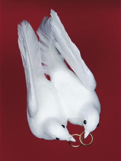 Artificial Wedding Doves-Josh Westrich-Photographic Print