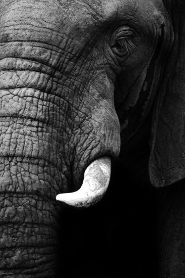 Artistic Black And White Elephant-Donvanstaden-Art Print