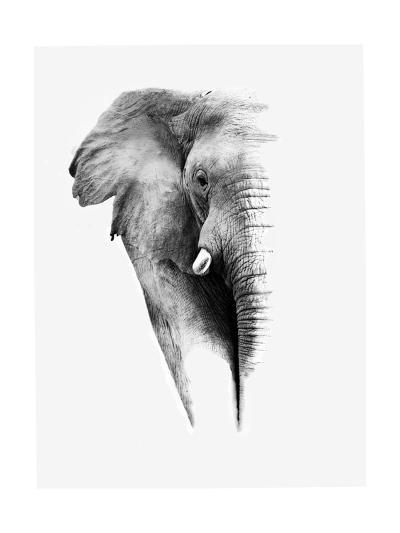 Artistic Black And White Elephant-Donvanstaden-Art Print