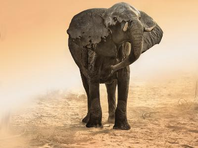Artistic Rendition Elephant in Dust and Sunglow-Sheila Haddad-Photographic Print