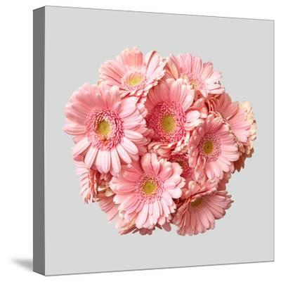 Bouquet of Pink Gerberas by artjazz