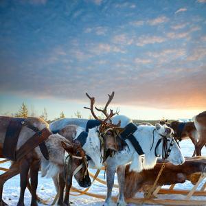 Northern Deer by Artpilot