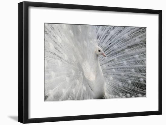 As White as Snow-Victoria Ivanova-Framed Photographic Print