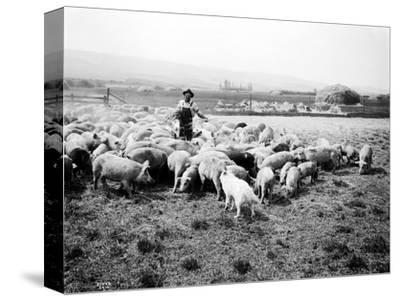 Ellensburg, WA, Goodwin Hogs, 1915