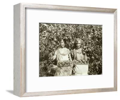 Girls with Apple Harvest, Yakima, 1928