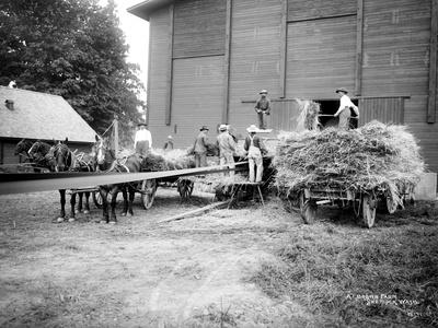 Harvesting Hay, Circa 1909
