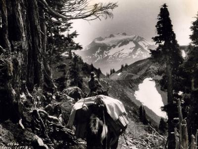 Hoh-Solduc Trail, Olympic Peninsula, Undated