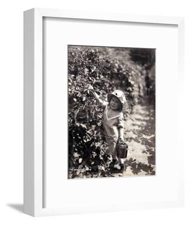 Kirkland Berry Farms, Baby Berry Picker, Undated