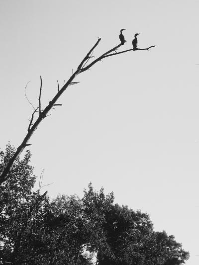 Ash River 01-Gordon Semmens-Photographic Print