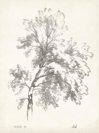 Ash Tree Study--Art Print