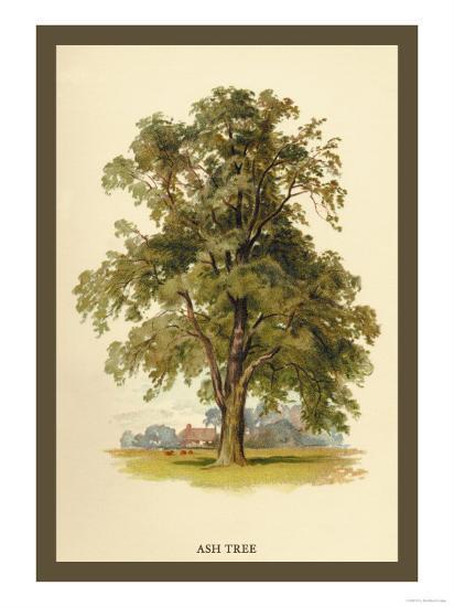 Ash Tree-W^h^j^ Boot-Art Print