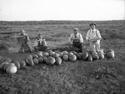 Men Eating Watermelon in Field Near Moses Lake, WA, 1911