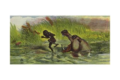Ashanti Man Being Menaced by a Hippopotamus-Ernest Henry Griset-Giclee Print