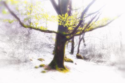 Ashes of Time-Viviane Fedieu Daniel-Photographic Print