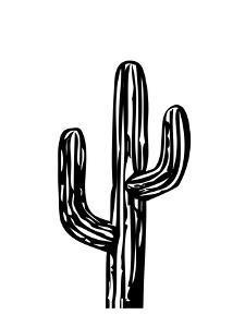 Cactus on White by Ashlee Rae