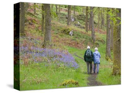 An Elderly Couple Walking Through a Bluebell Wood on the Shores of Coniston Water, United Kingdom