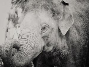 Baby Elephant by Ashley Davis