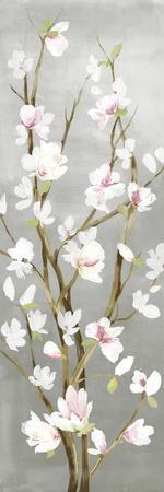Budding Magnolia II