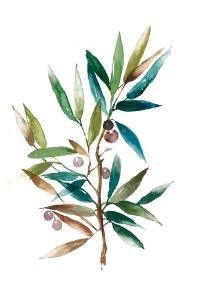 Olive Branch II by Asia Jensen