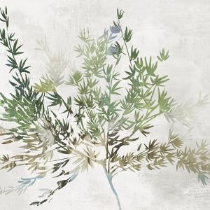 Olive Branch by Asia Jensen