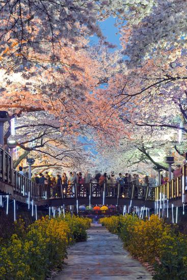 Asia, Republic of Korea, South Korea, Jinhei, Spring Cherry Blossom Festival-Christian Kober-Photographic Print