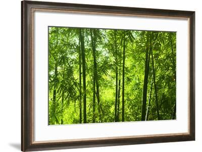 Asian Bamboo Forest with Morning Sunlight.-szefei-Framed Photographic Print