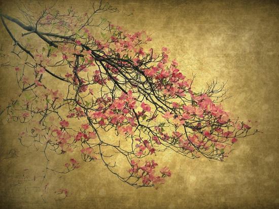 Asian Dogwood-Jessica Jenney-Giclee Print