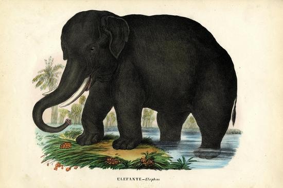 Asian Elephant, 1863-79-Raimundo Petraroja-Giclee Print