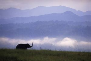 Asian Elephant in the Himalayan Foothills