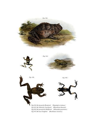 Asian Horned Frog--Giclee Print