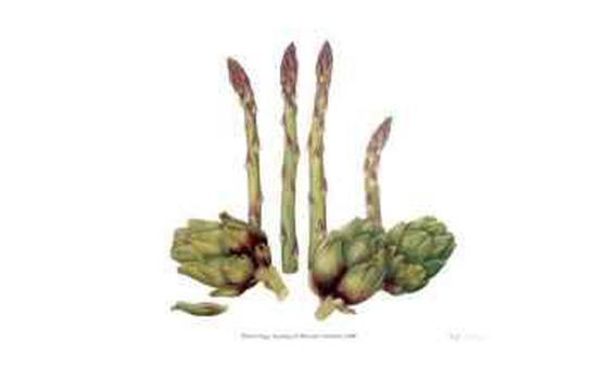 Asparagus and Minature Artichokes-Pamela Stagg-Collectable Print
