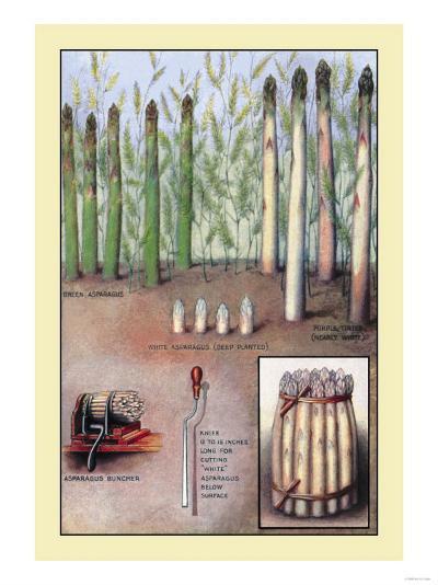 Asparagus--Art Print